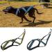 Bardature canine